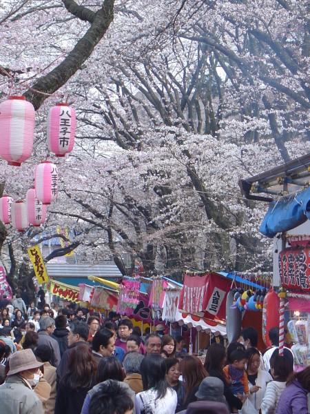 Contemplación del Cerezo, Tokio